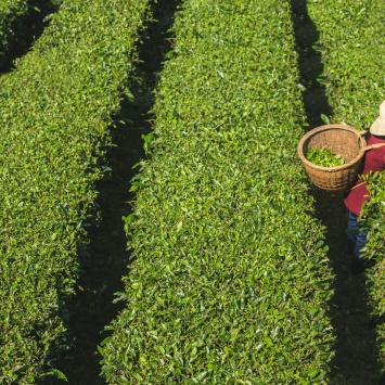 Certifikace Fairtrade a licenční smlouva