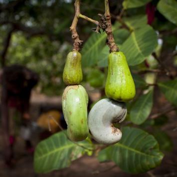 Ořechy a oleje