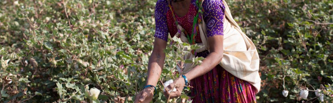 Čeští novináři míří za pěstiteli fairtradové bavlny do Indie