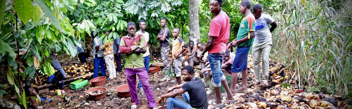 Ghana a Pobřeží slonoviny ohlásily zvýšení cen kakaa