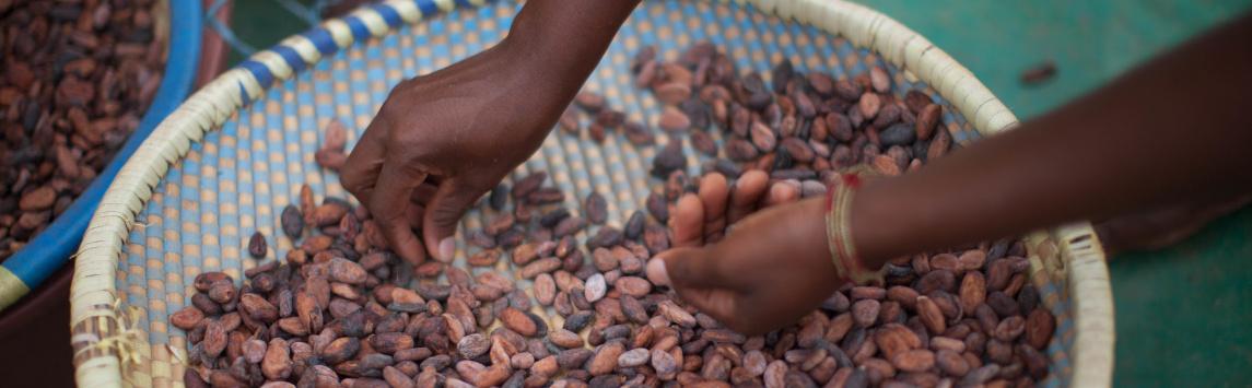 Zboží scertifikací Fairtrade se prodává vČR stále více, dominují kakao a káva