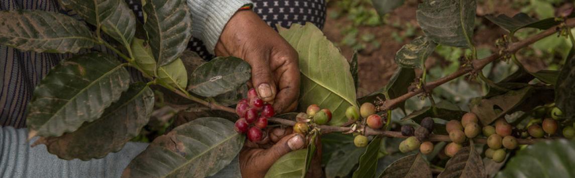 Co má práce v zemědělství společného s lidskými právy?