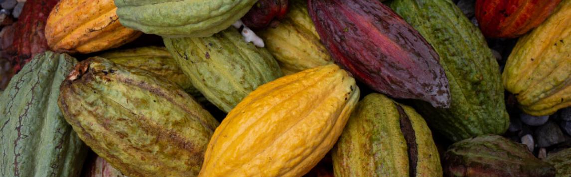 Čokoládové Velikonoce, které mohou mít dopad na rozvoj komunit