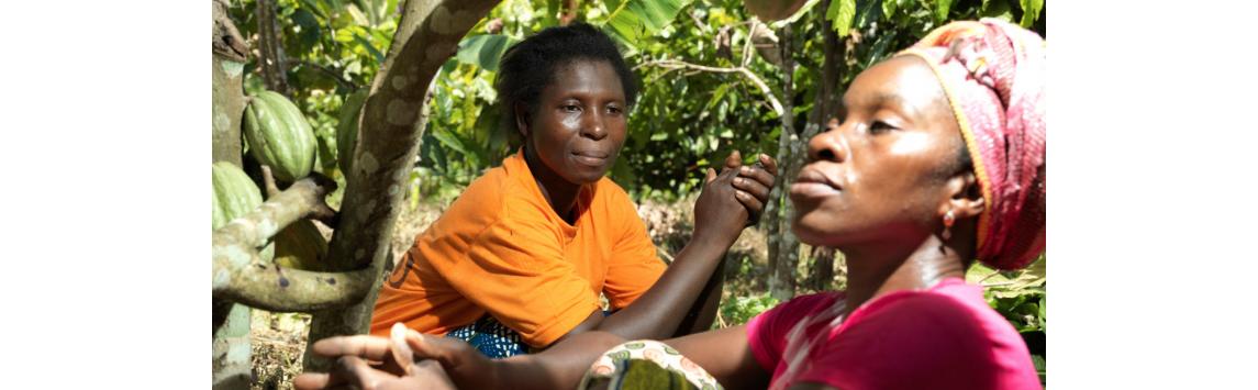 COVID-19: Afričtí pěstitelé se mohou brzy octnout na pokraji kolapsu a již nyní vykazují obrovské ztráty