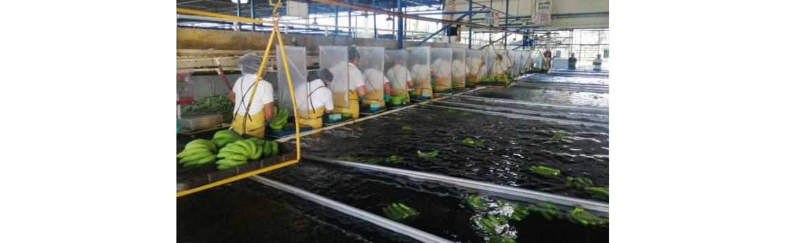 Covid-19: Aktuální informace o dopadech pandemie na pěstitele v Latinské Americe a Karibiku