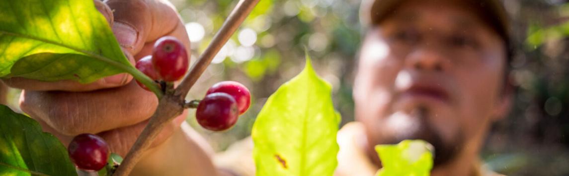 Fairtrade ve snaze zvýšit příjmy pěstitelů rozšiřuje požadavky na certifikaci kakaových a kávových družstev aobchodníků