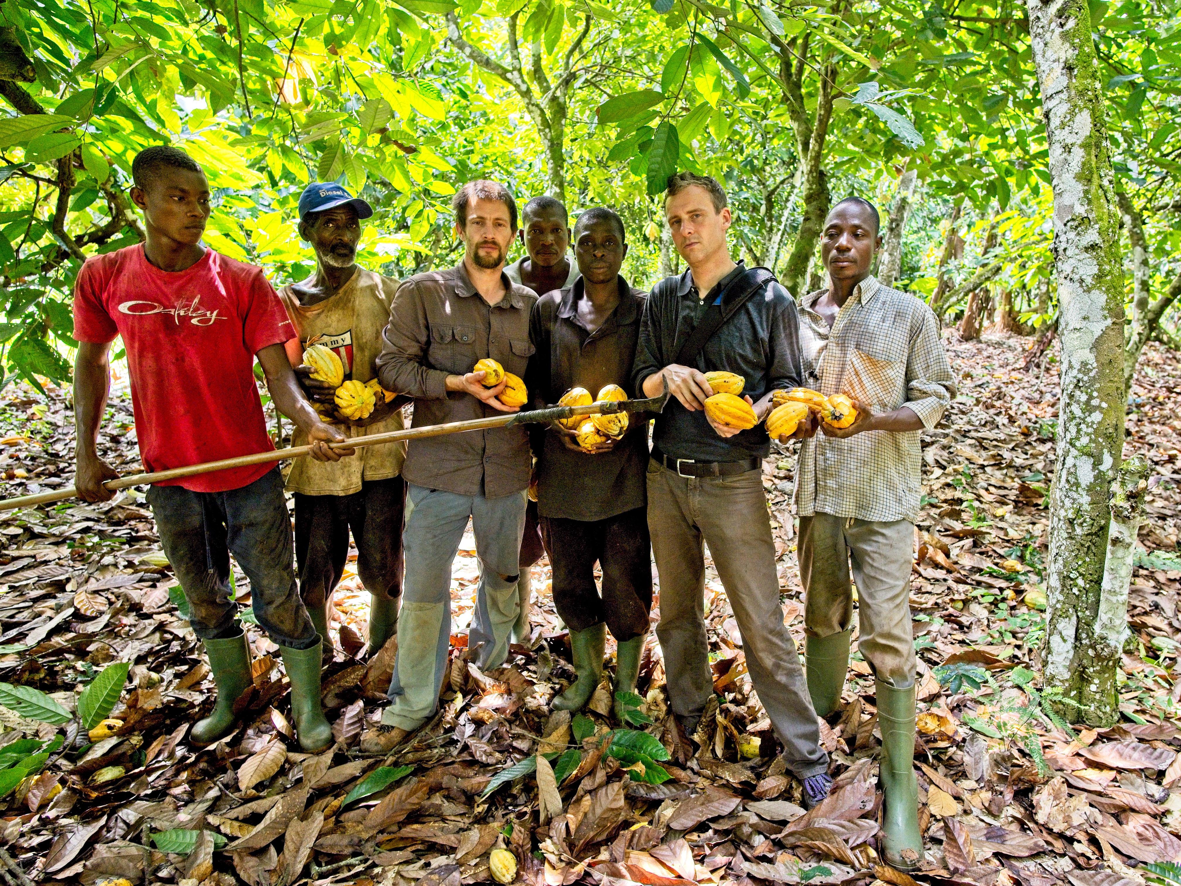 Dělníci sbírající zralé plody kakaovníku