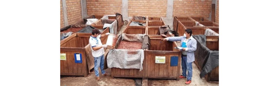 Fairtrade vreakci na pandemii onemocnění covid-19 poskytuje přímou finanční podporu pěstitelům zAsie, Afriky a Latinské Ameriky. Přispěli i Češi a Slováci.
