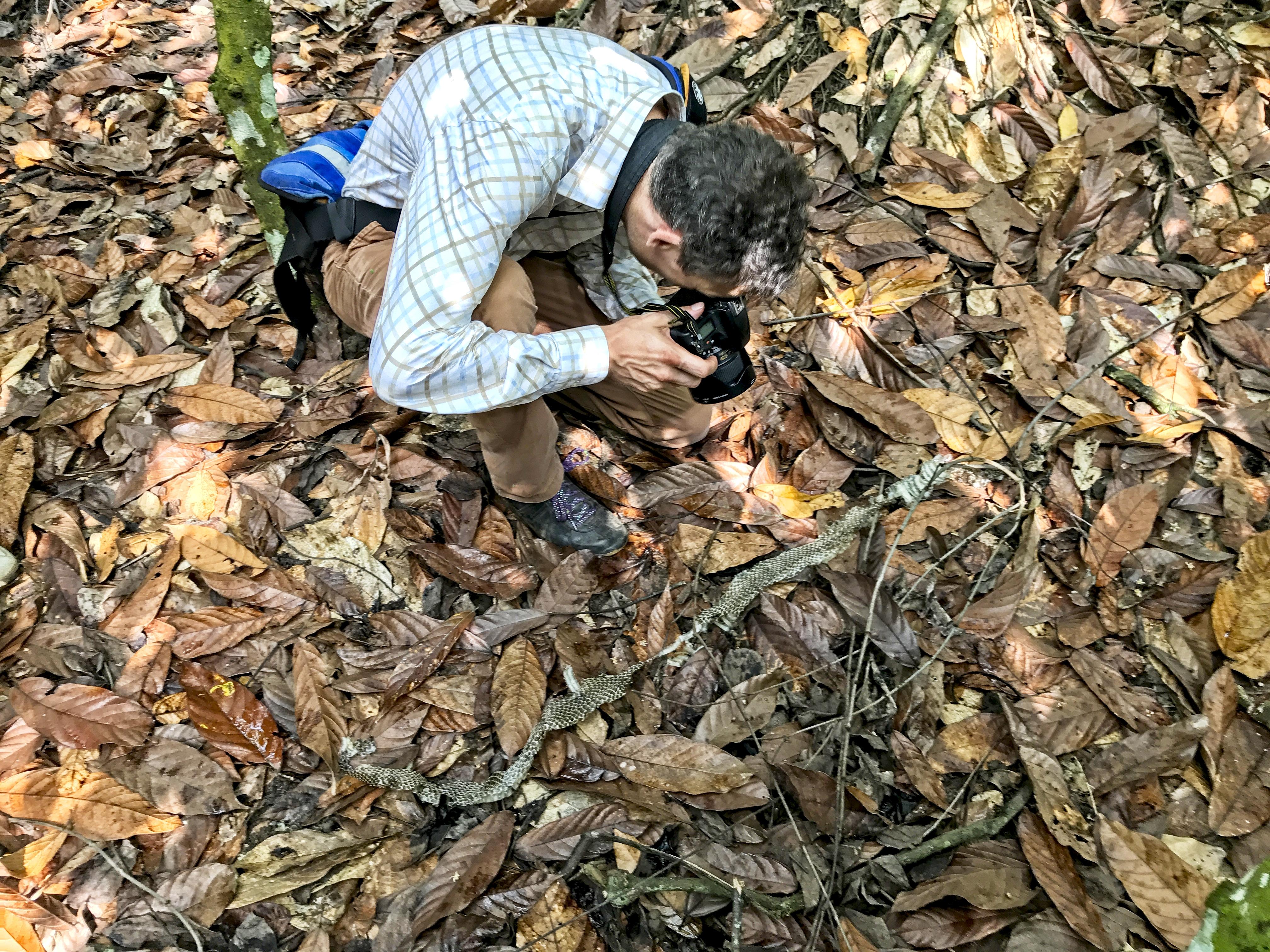 Hadí svlečka mezi kakaovníky