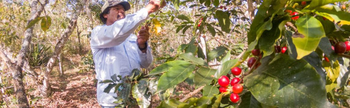 Jak zajistit, aby legislativa pro řádnou péči o lidská práva byla uplatňována i u drobných pěstitelů a dělníků