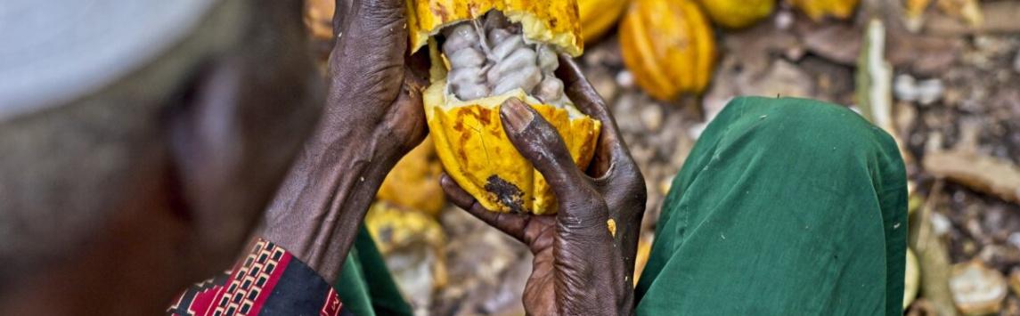 Fairtrade producenti ve veřejné promluvě žádají Nestlé, aby cukrovinka KitKat zůstala Fairtrade.